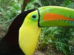 Copan Bird